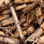 Biomass: Using Renewable Energy to Heat your Home